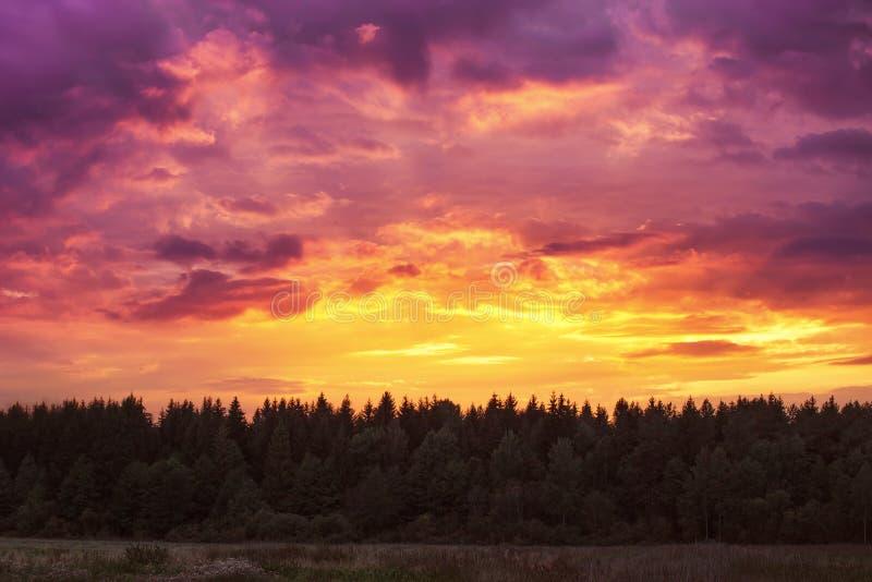 Puesta del sol ardiente majestuosa sobre bosque en zona rural imagenes de archivo