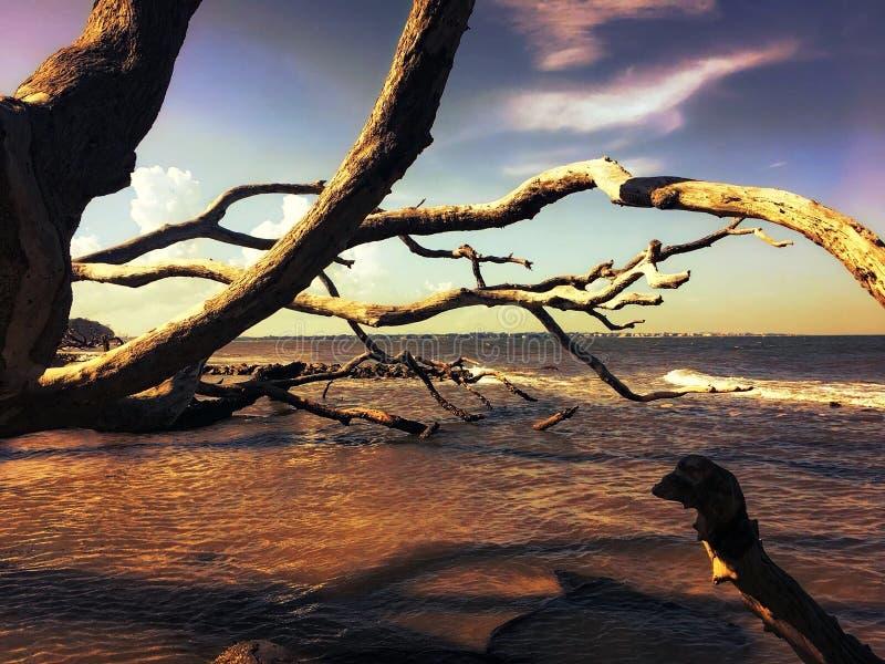 Puesta del sol bonita en la playa de la madera de deriva foto de archivo libre de regalías