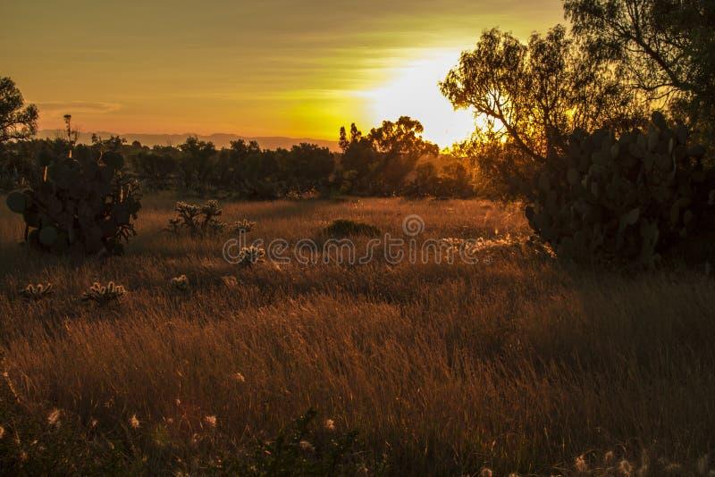 Puesta del sol caliente en un prado fotos de archivo