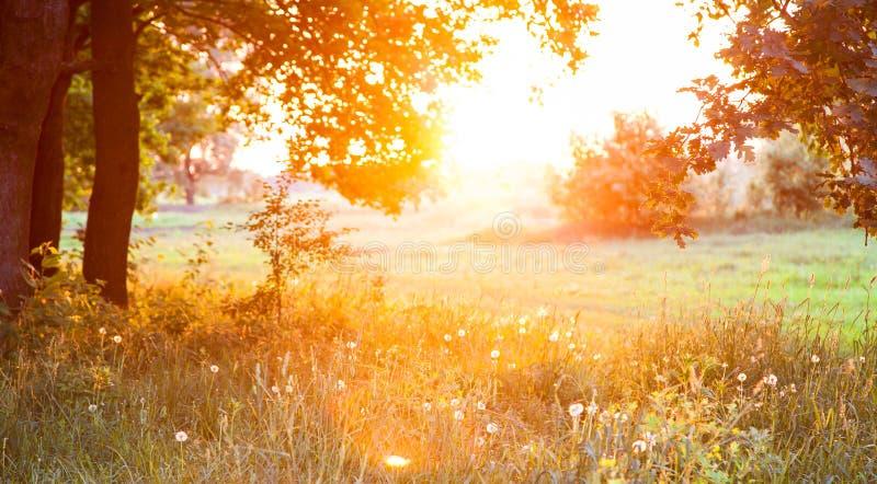 Puesta del sol. Claro del bosque. foto de archivo libre de regalías