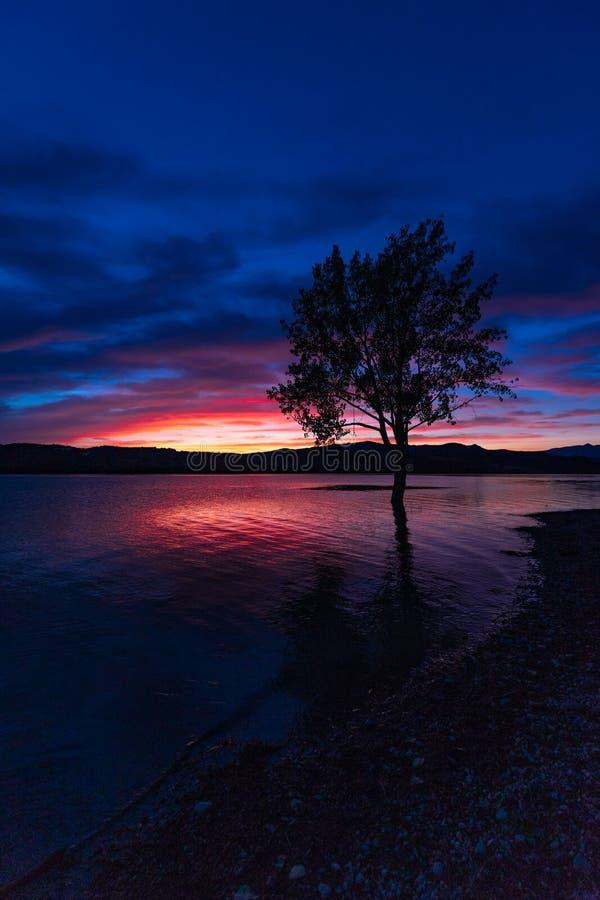 Puesta del sol con colores increíbles un árbol imagen de archivo libre de regalías