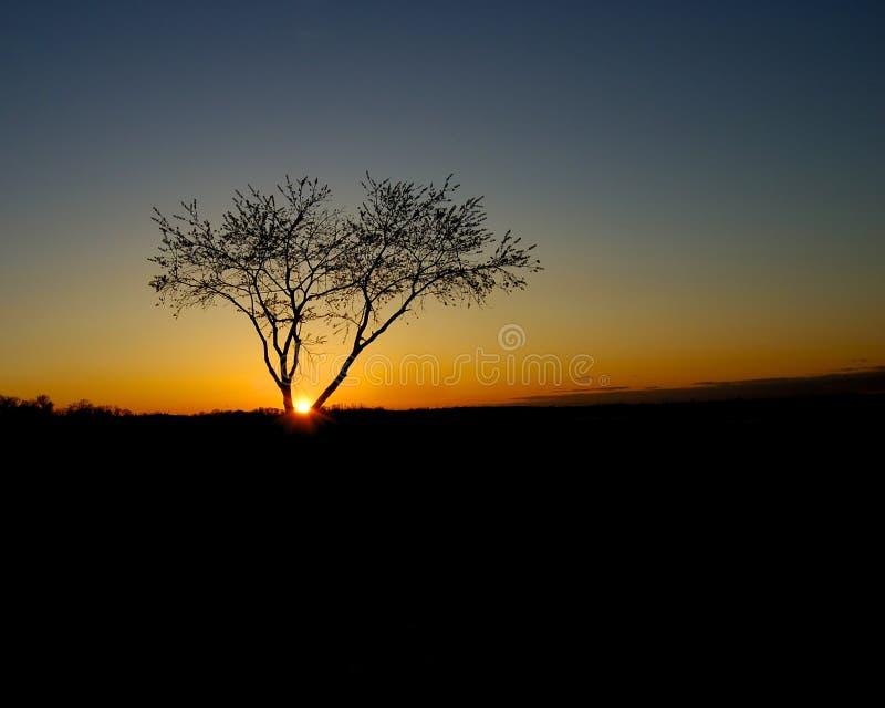 Puesta del sol con el árbol fotografía de archivo libre de regalías