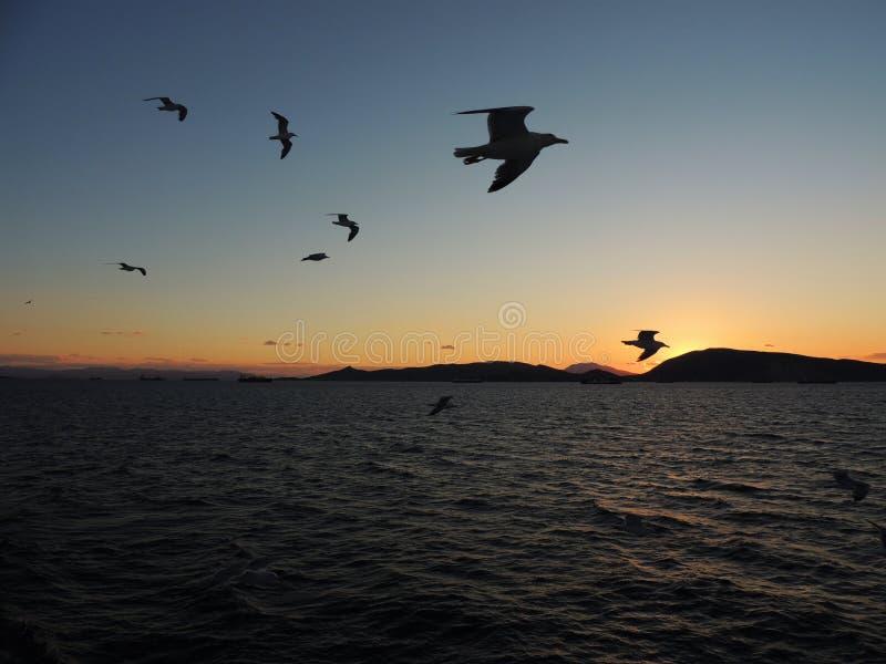 Puesta del sol con el vuelo de los pájaros visto de un barco en Grecia foto de archivo libre de regalías