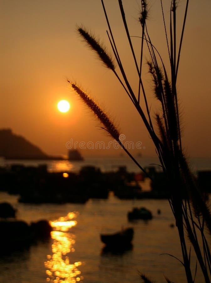 Puesta del sol con la avena del mar fotografía de archivo libre de regalías