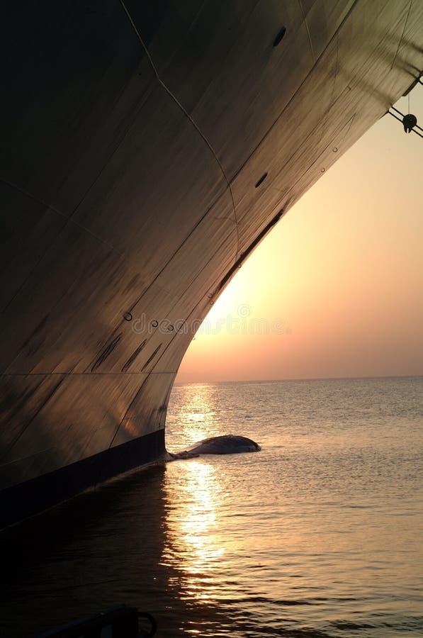 Puesta del sol con la nave fotografía de archivo libre de regalías