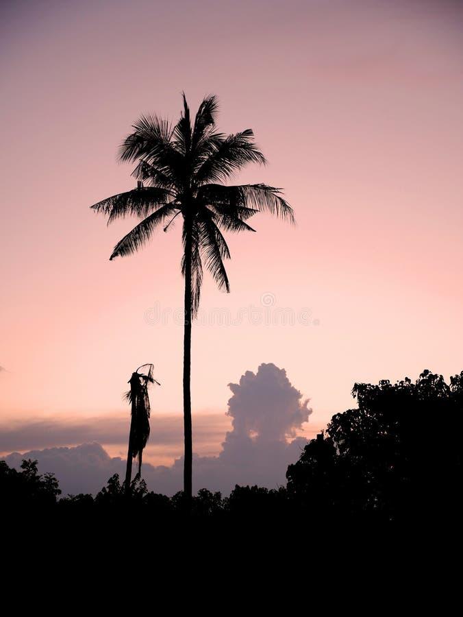 Puesta del sol con la palmera foto de archivo libre de regalías