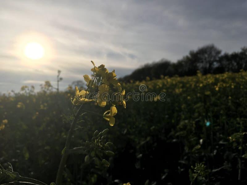 Puesta del sol con la rabina fotografía de archivo libre de regalías