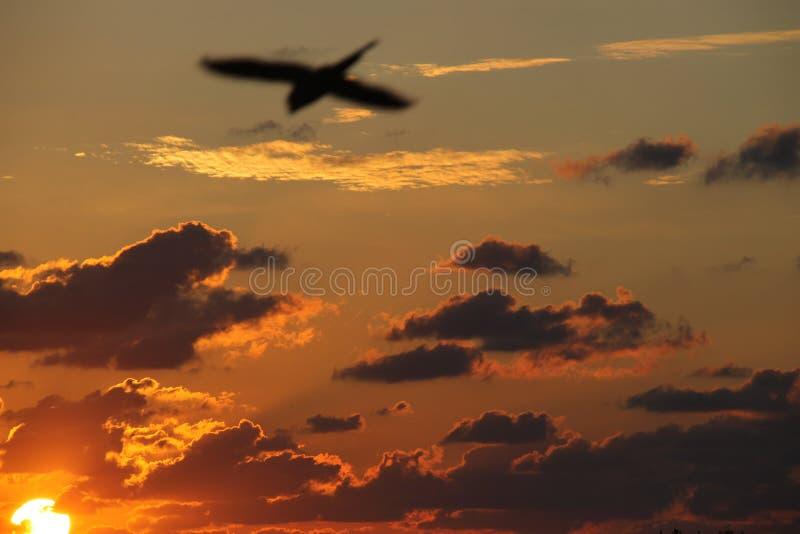 Puesta del sol con la silueta de un pájaro en el cielo fotos de archivo