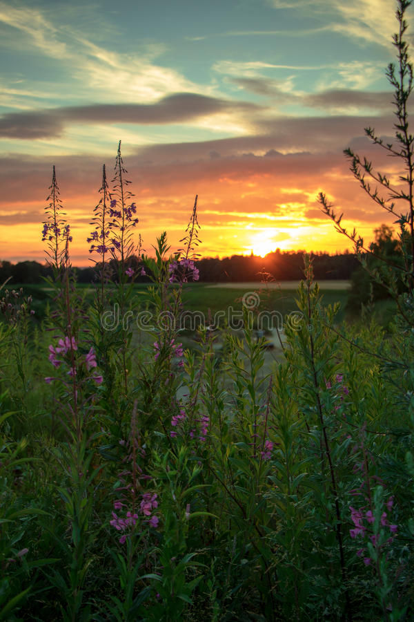 Puesta del sol con las flores fotos de archivo