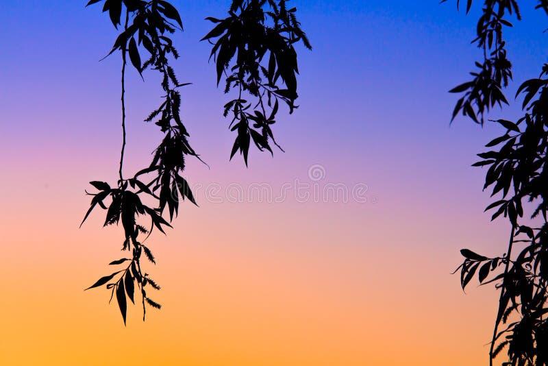 Puesta del sol con las hojas y los colores que cruzan fotos de archivo libres de regalías