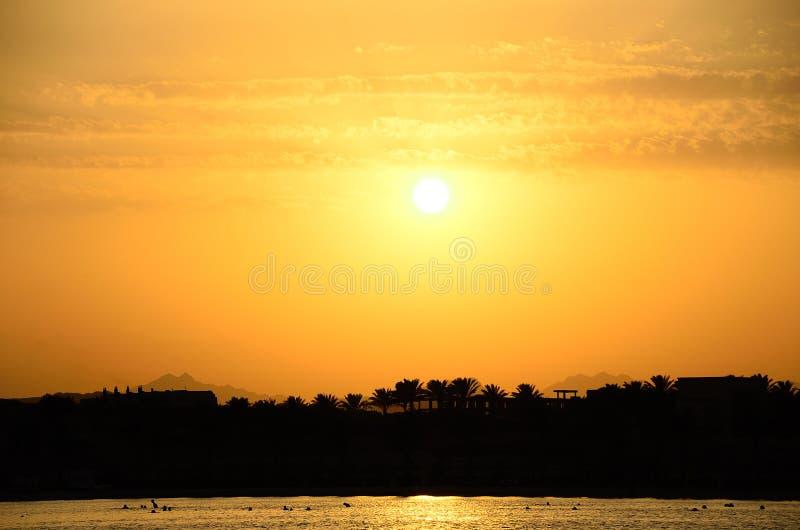 Puesta del sol con las palmeras por el mar foto de archivo