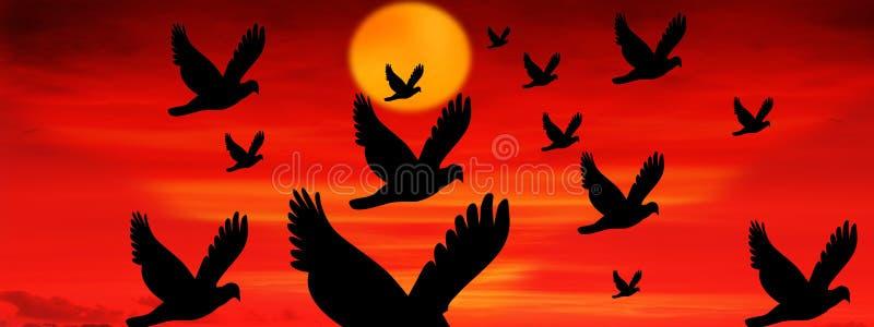 Puesta del sol con los pájaros de vuelo fotografía de archivo libre de regalías