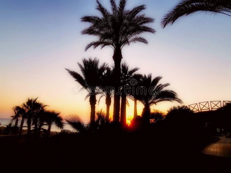 Puesta del sol con palmtrees imagen de archivo