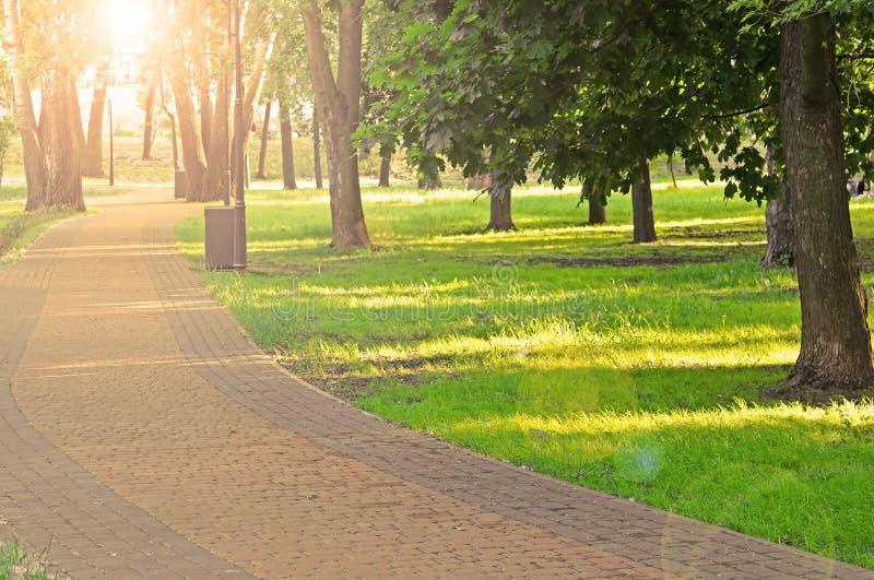 Puesta del sol con resplandores en el parque imagen de archivo