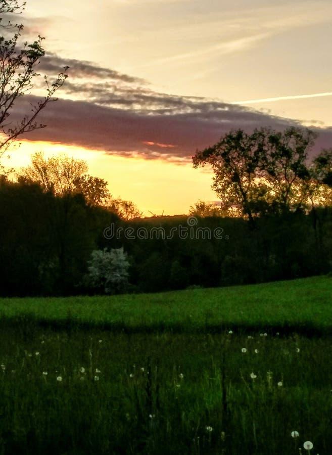 Puesta del sol contra la hierba verde foto de archivo libre de regalías