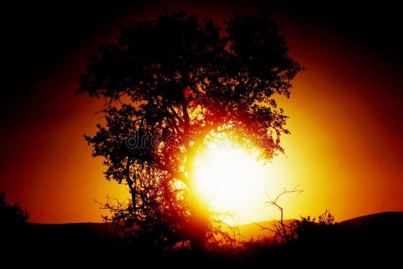 Puesta del sol de Afican fotos de archivo