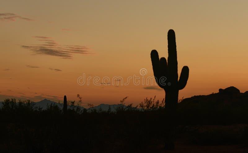 Puesta del sol de Arizona con una silueta de un cactus del saguaro fotografía de archivo