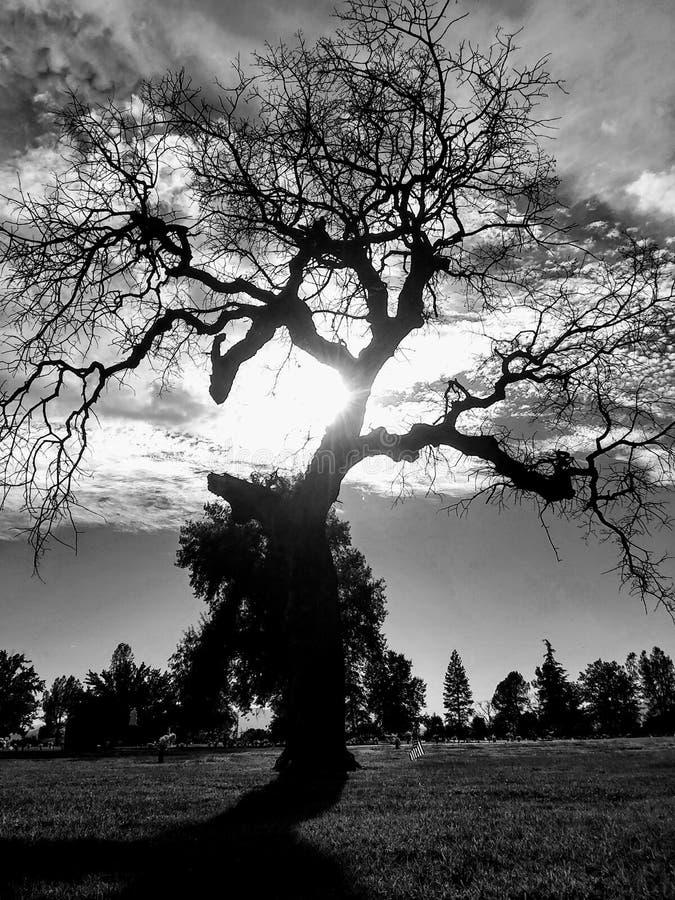 Puesta del sol de Cymetary fotografía de archivo libre de regalías