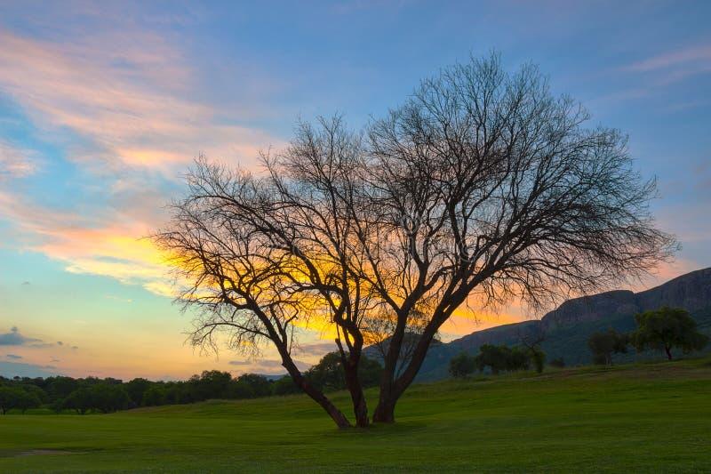 Puesta del sol de HDR con el árbol en el área 7 de Magaliesburg foto de archivo libre de regalías