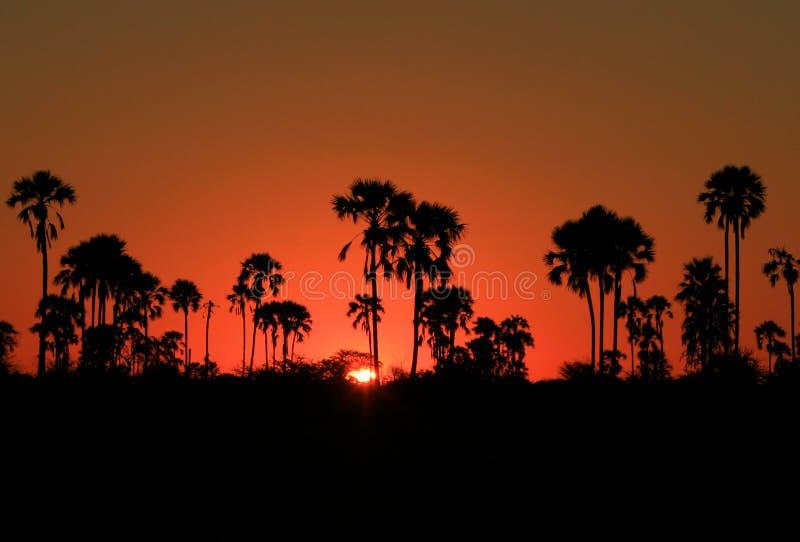 Puesta del sol de Kalahari foto de archivo libre de regalías