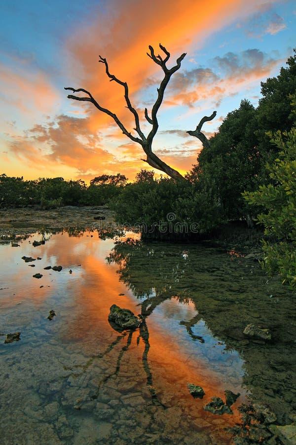 Puesta del sol de Key West - llaves de la Florida - árbol muerto fotografía de archivo
