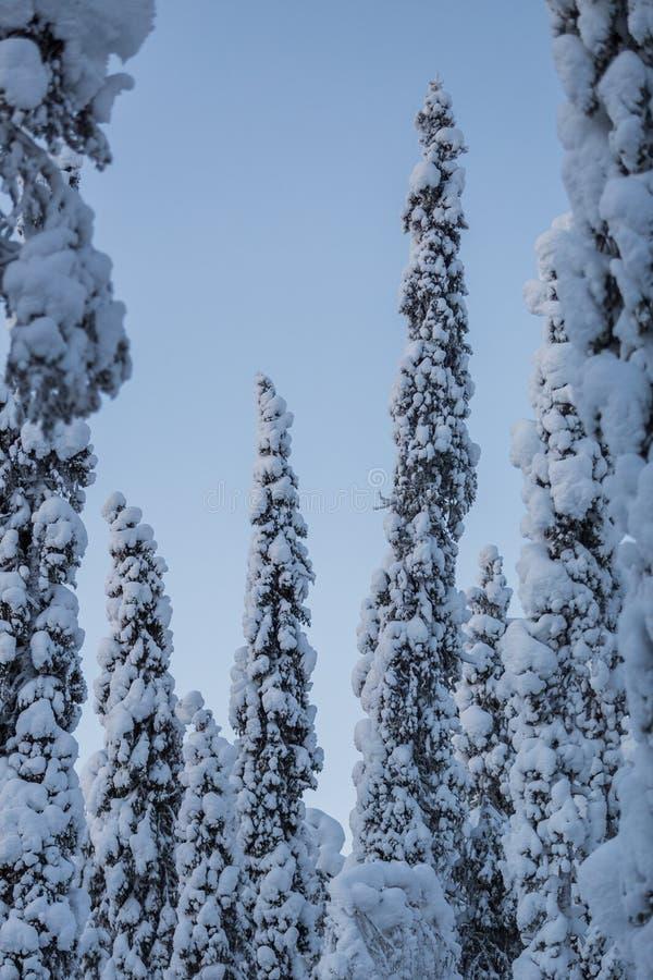 Puesta del sol de la escena de Laponia del país de las maravillas del invierno foto de archivo libre de regalías