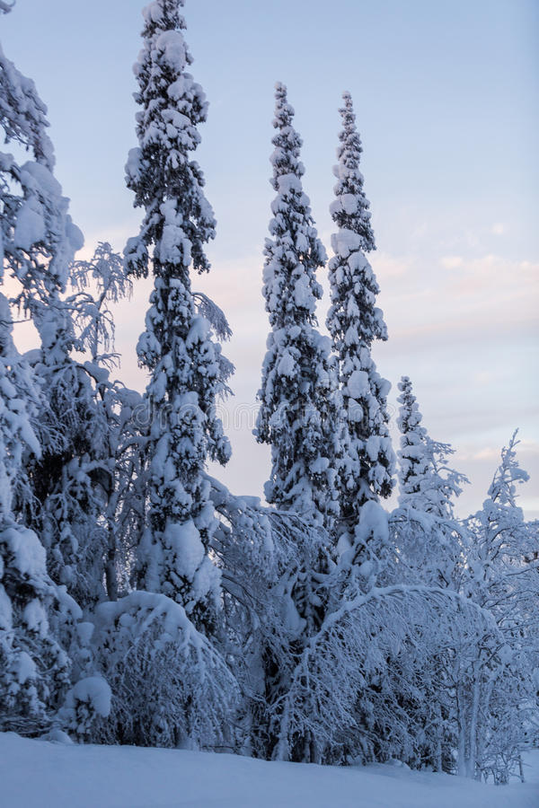 Puesta del sol de la escena de Laponia del país de las maravillas del invierno fotos de archivo libres de regalías