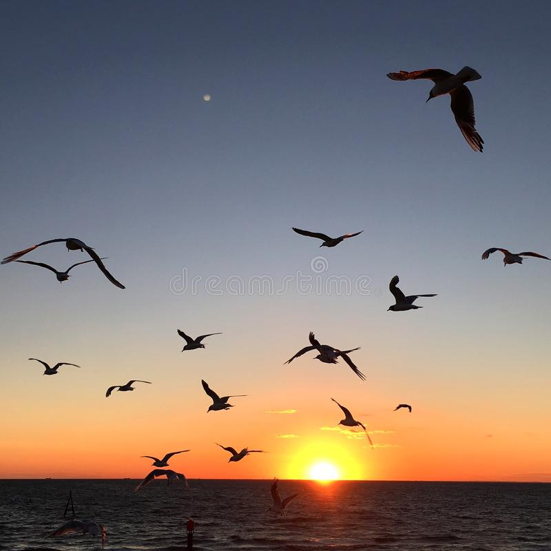 Puesta del sol de la gaviota foto de archivo libre de regalías