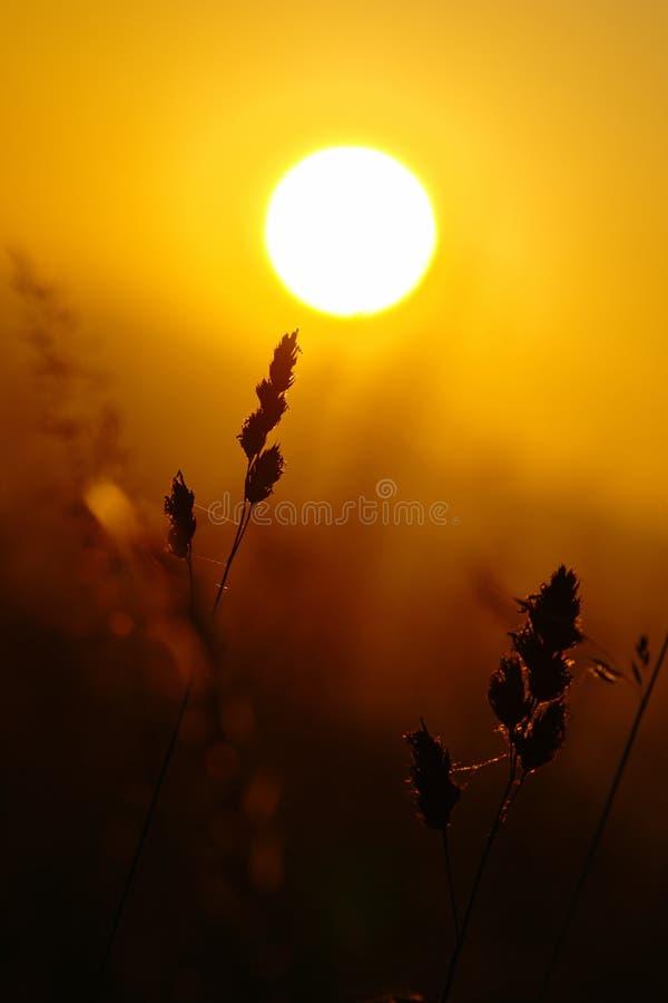 Puesta del sol de la hierba del verano fotografía de archivo libre de regalías
