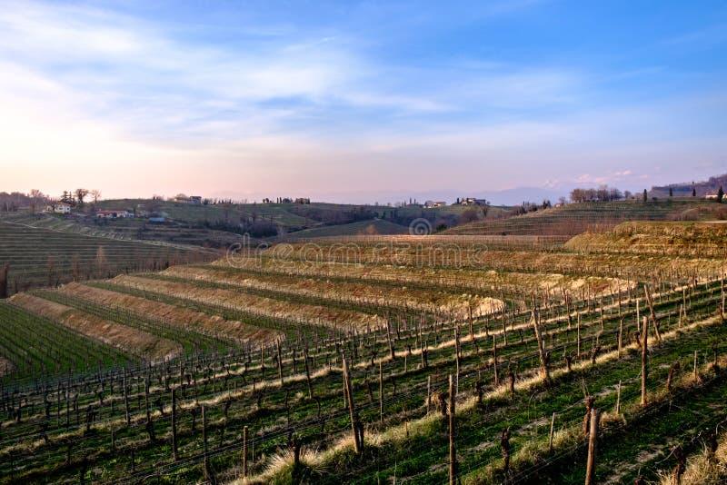 Puesta del sol de la primavera en los vi?edos de Collio Friulano imagen de archivo