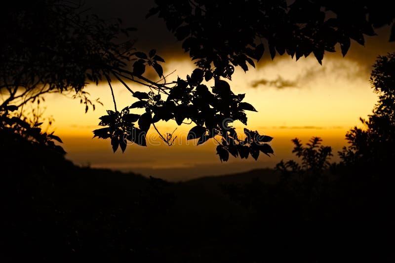 Puesta del sol de la selva foto de archivo libre de regalías