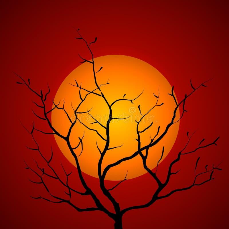 Puesta del sol de la silueta de la ramificación de árbol stock de ilustración