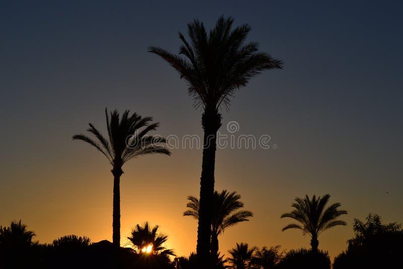 Puesta del sol de la tarde en la playa imagen de archivo libre de regalías
