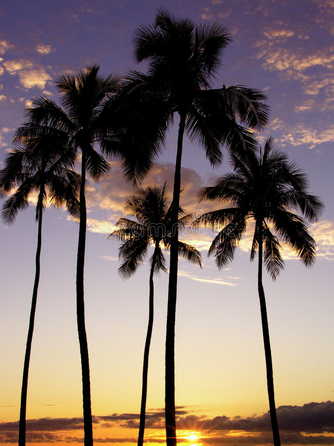 Puesta del sol de las palmeras de Moana del Ala foto de archivo libre de regalías