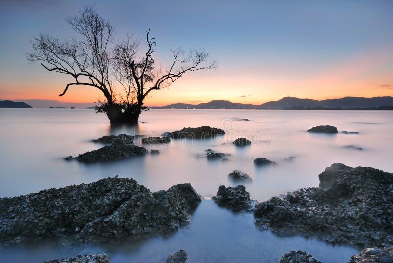 Puesta del sol de los árboles del mangle imágenes de archivo libres de regalías