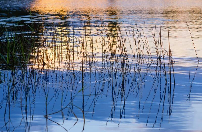 Puesta del sol de oro reflejada en el agua con la hierba creciente fotos de archivo libres de regalías