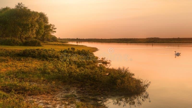 Puesta del sol de oro sobre el lago tranquilo con el cisne fotografía de archivo