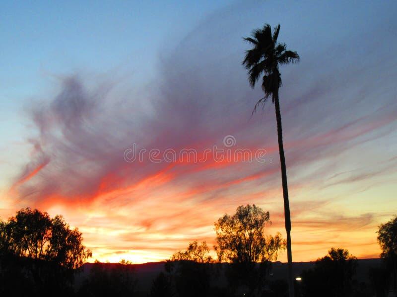 Puesta del sol de palmas fotografía de archivo