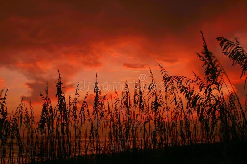 Puesta del sol de Seaoat foto de archivo