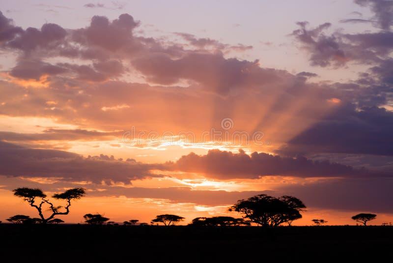 Puesta del sol de Serengeti imagenes de archivo