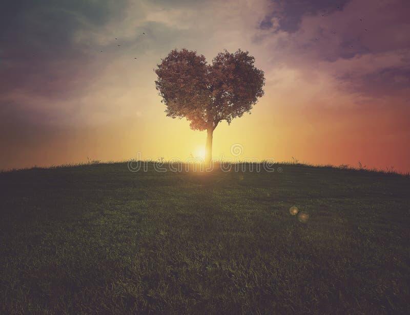 Puesta del sol del árbol del corazón fotos de archivo libres de regalías