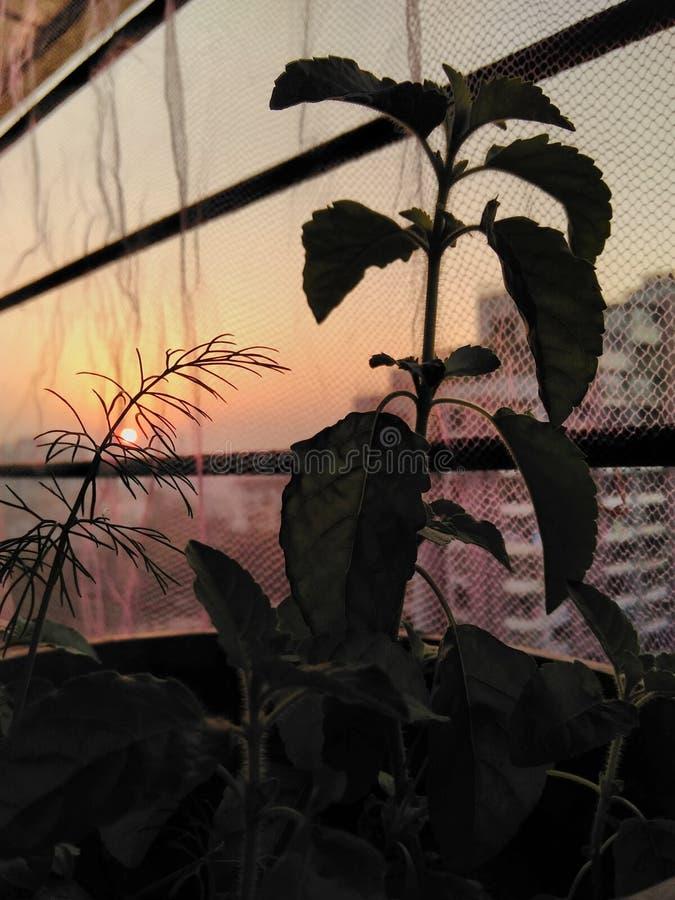 Puesta del sol del balcón imagen de archivo libre de regalías
