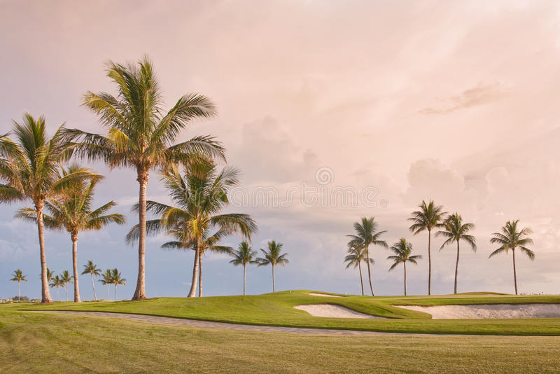 Puesta del sol del campo de golf con las palmeras tropicales imágenes de archivo libres de regalías