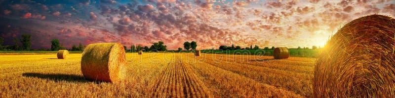 Puesta del sol del campo de maíz imagen de archivo libre de regalías