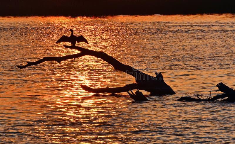 Puesta del sol del delta de Danubio imagenes de archivo