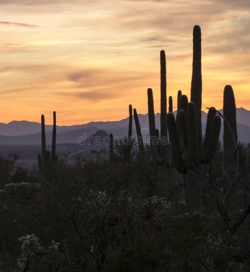 Puesta del sol del desierto en Arizona imagen de archivo