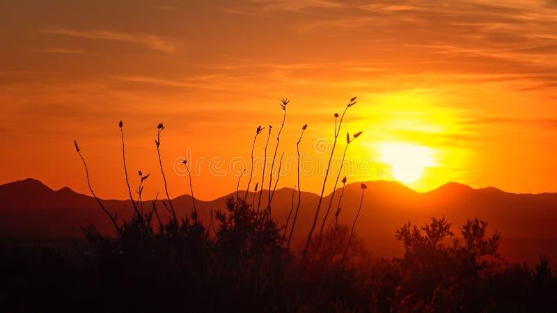 Puesta del sol del desierto en parque nacional de Saguaro fotografía de archivo
