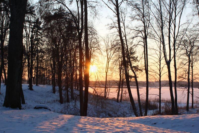 Puesta del sol del invierno en bosque por el lago fotografía de archivo libre de regalías
