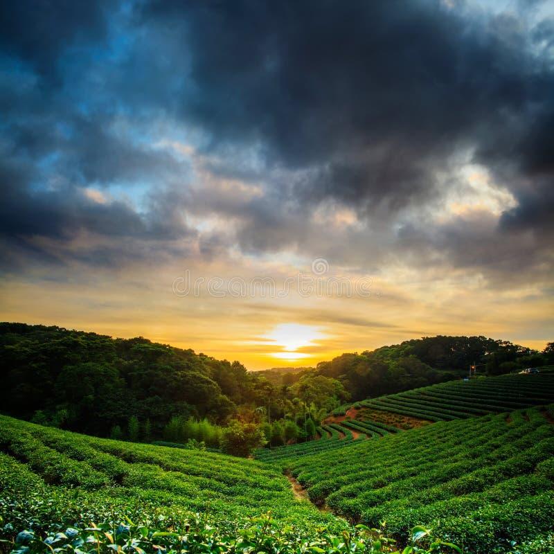 Puesta del sol del jardín de té fotos de archivo libres de regalías