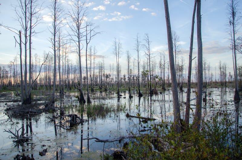 Puesta del sol del pantano de Okefenokee foto de archivo